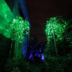 Colour changing fairy lights set on Green