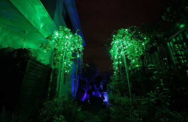 81-green-fairy-lights-in-action