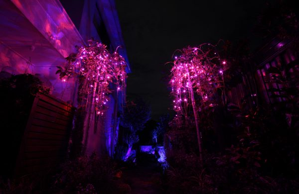 84-magenta-fairy-lights