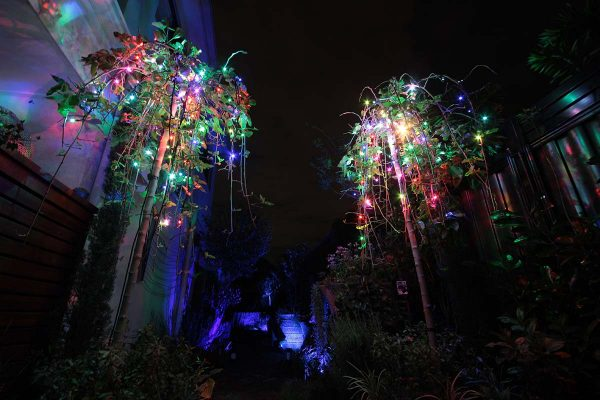 Colour changing fairy lights in small trees