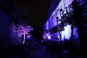 Our 15 watt flood lights set to purple