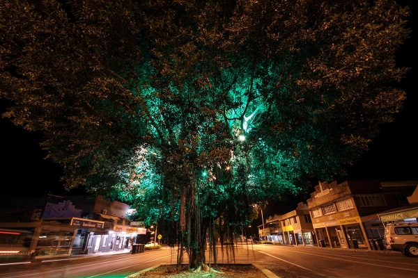 Large flood lights installed in a tree