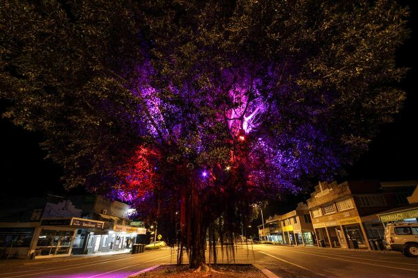 Flood lights installed into a tree