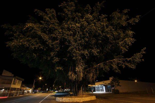 Flood light tree not lit