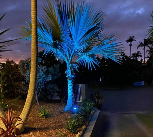 Blue flood light tree
