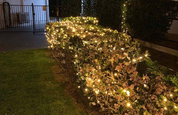 Warm white fairy lighting hedge fairy lights