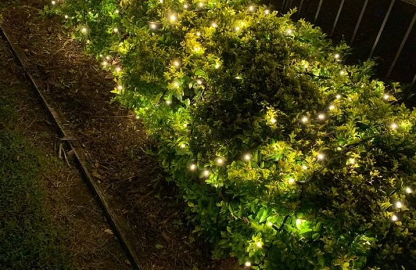 Event-Installation---Fairy-Light-Hedge
