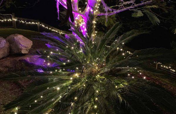 Event-Installation---Fairy-Light-&-Wash-Light-Tree-Landscape-(1a)