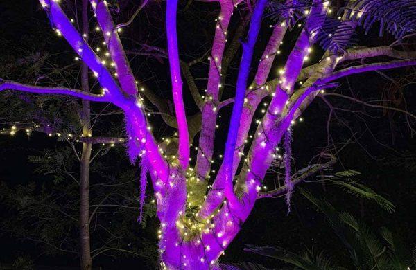 Event-Installation---Fairy-Light-&-Wash-Light-Tree-Landscape-(2)