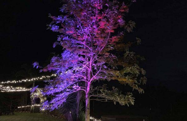 Event-Installation---Wash-Light-Tree---Fairy-Light-Hedge-(2)