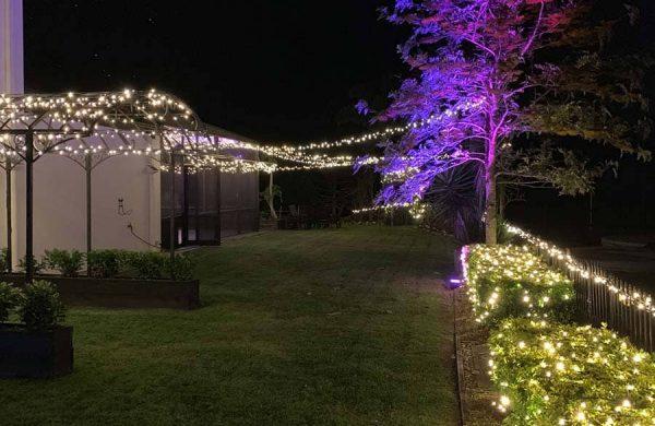 Event-Installation---Wash-Light-Tree---Fairy-Light-Hedge