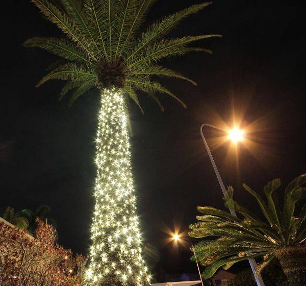 fairy lights on a palm tree
