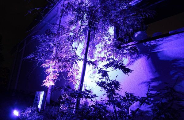 Landscape-Light-Installation---Inside-Out-Collective-(15)