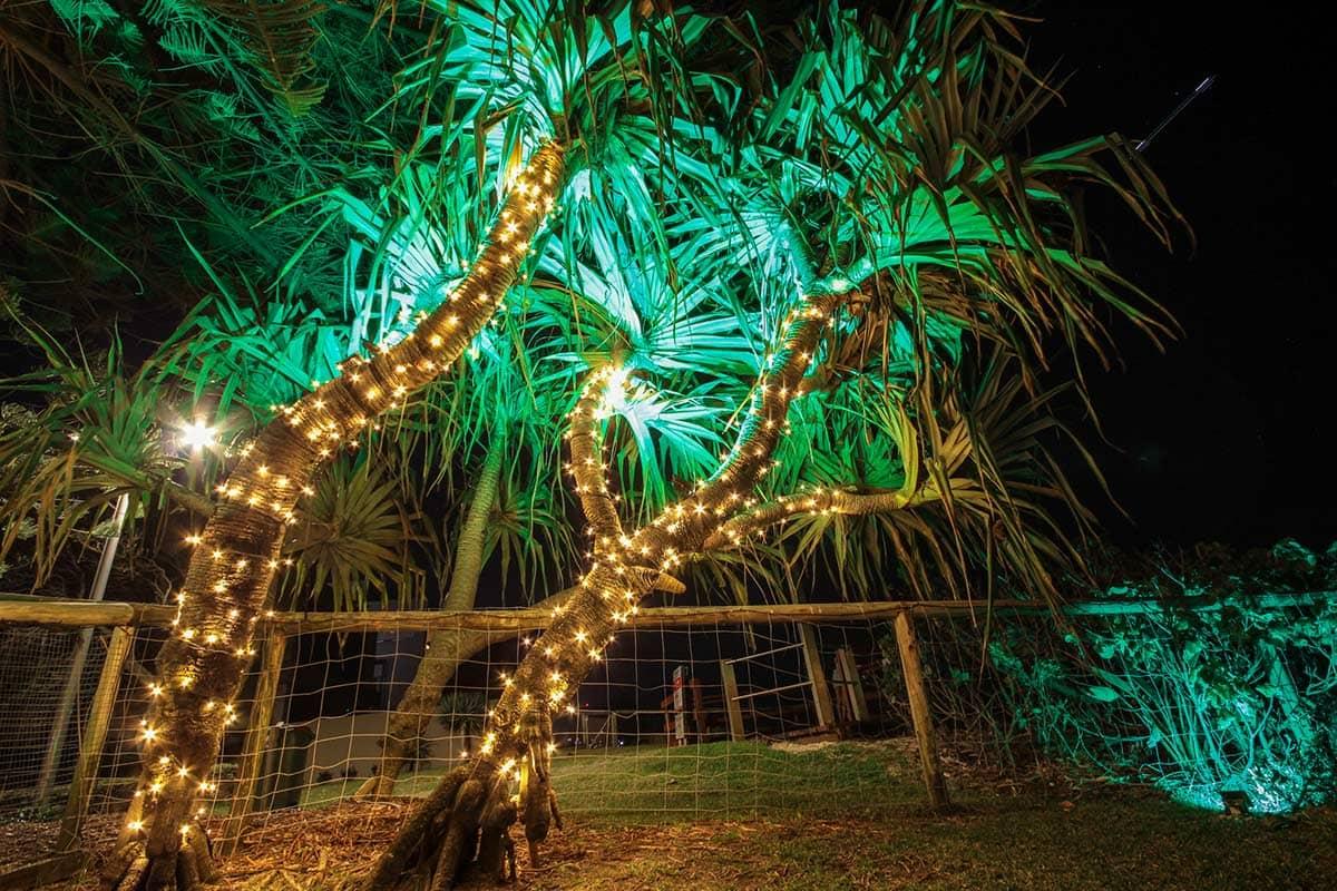 Pandanus-tree-24v-fairy-lighting-LED-wash-garden-lights-decorative-lighting-(1)