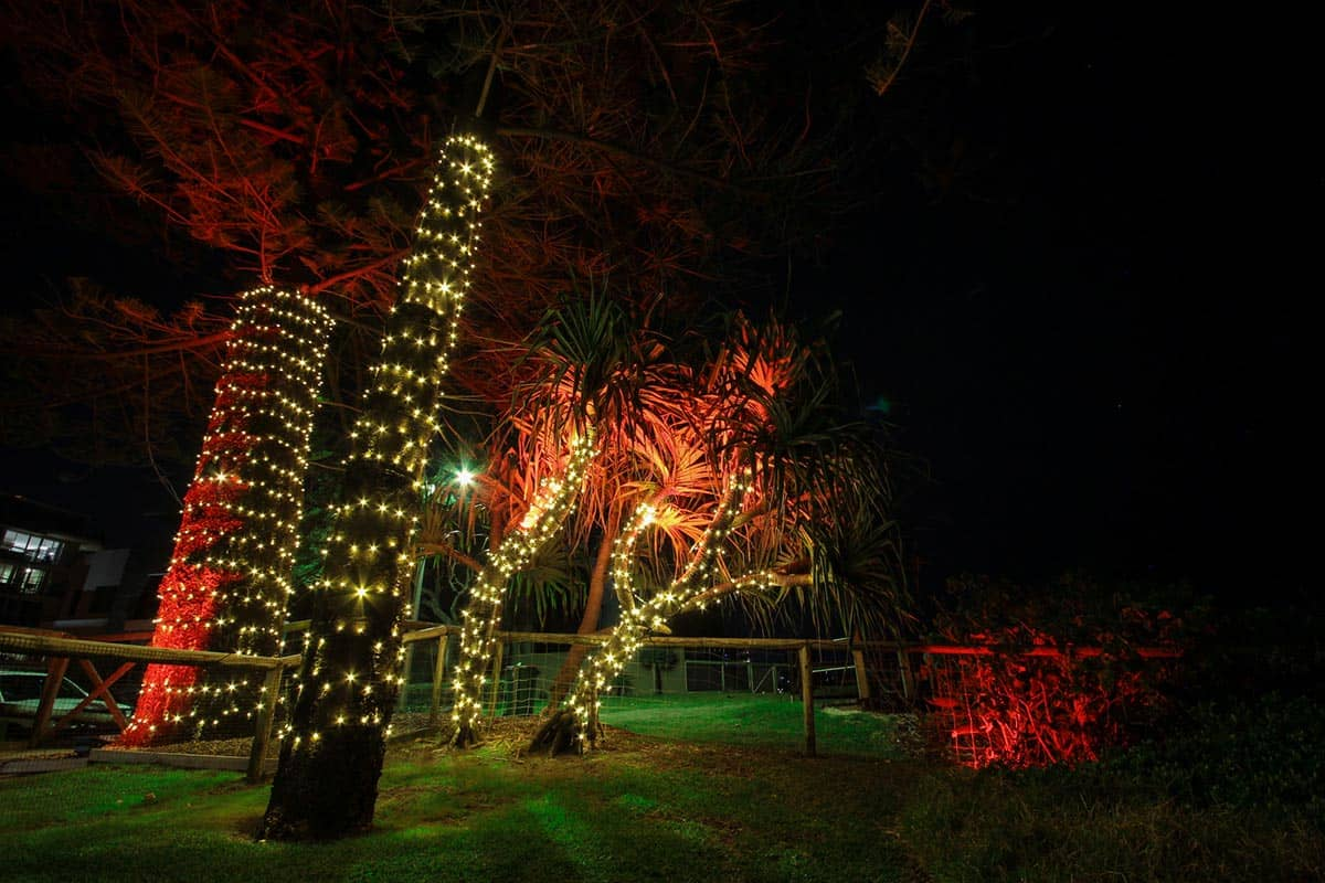 Pandanus-tree-24v-fairy-lighting-LED-wash-garden-lights-decorative-lighting-(3)
