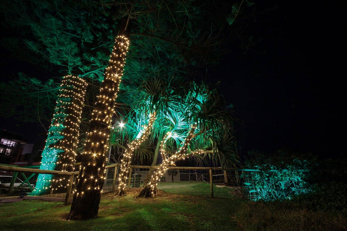 Pandanus-tree-24v-fairy-lighting-LED-wash-garden-lights-decorative-lighting-(4)