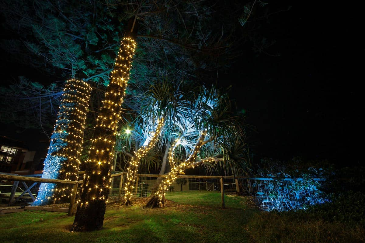 Pandanus-tree-24v-fairy-lighting-LED-wash-garden-lights-decorative-lighting-(5)