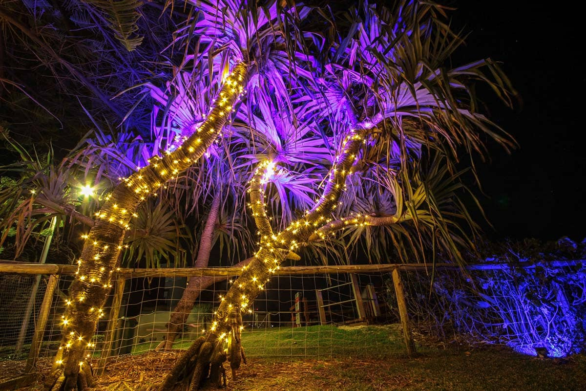 Fairy lighting and colour changing flood lights