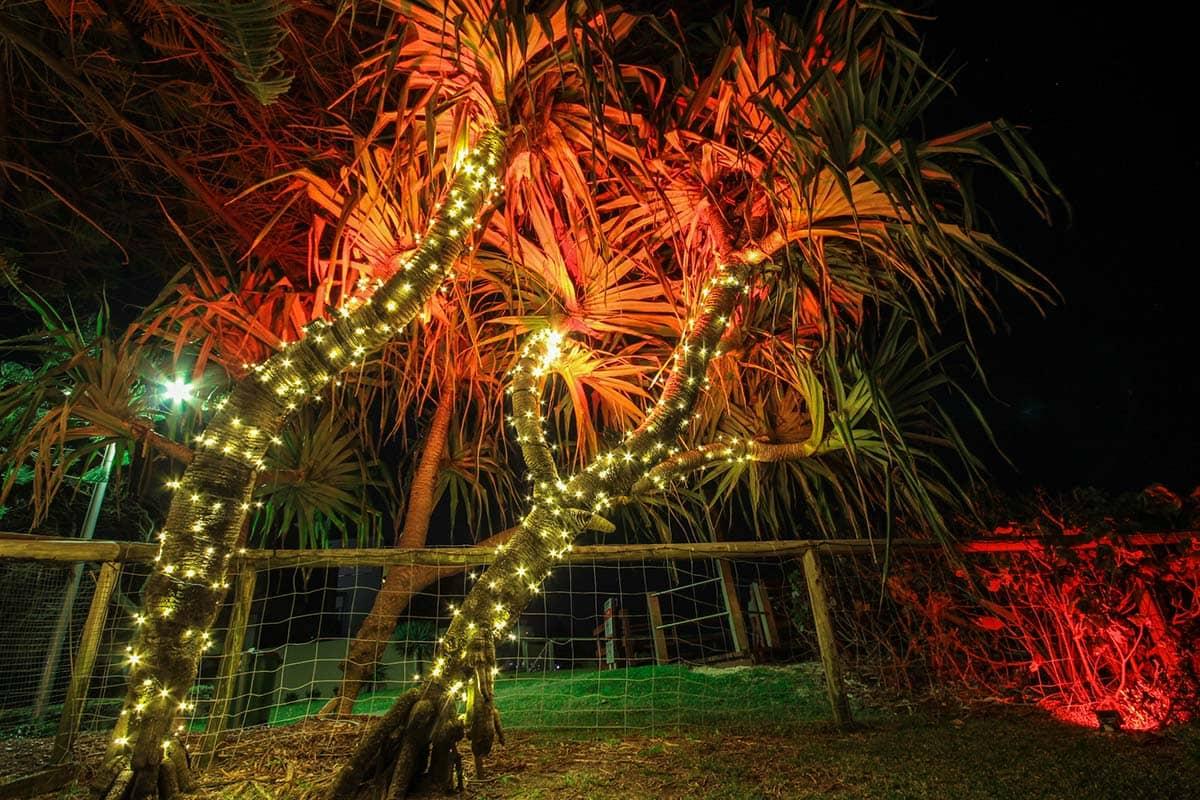 Pandanus-tree-24v-fairy-lighting-LED-wash-garden-lights-decorative-lighting-(9)