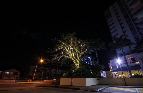 The-Grand-Hotel---Fairy-Lit-Pinciana-Tree-(1)