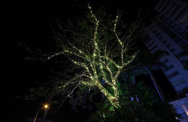 The-Grand-Hotel---Fairy-Lit-Pinciana-Tree-(5)