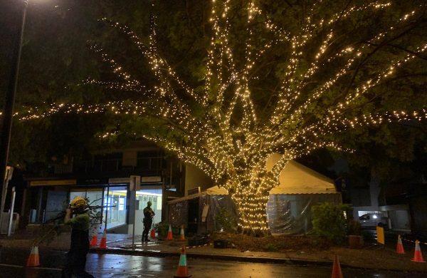 Tree-49---Entrance-Tree--(6)