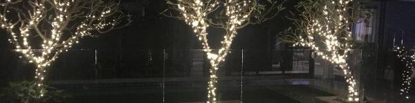 Solar fairy lights in a tree