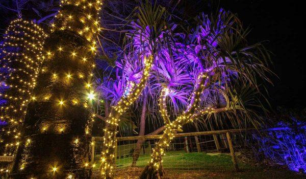 Pandanus-tree-24v-fairy-lighting-LED-wash-garden-lights-decorative-lighting-(7)