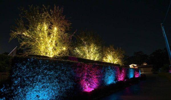 hedge-with-fairy-lighting-tree-(2)