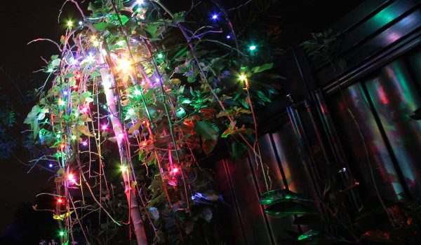 kitset-colour-changing-fairy-lights