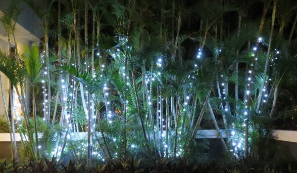 sheraton-mirage-gold-coast-golden-cane-palms-adorred-with-pure-white-led-fairy-lights